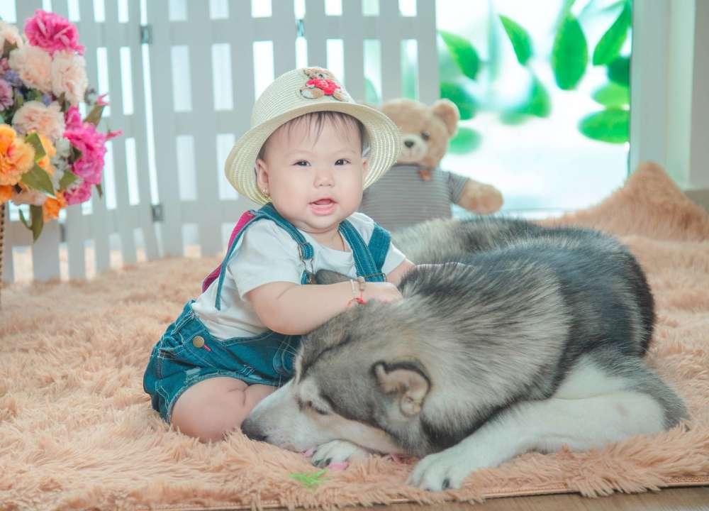 Bé và cún yêu - Donald studio - chụp ảnh đẹp nhất tphcm