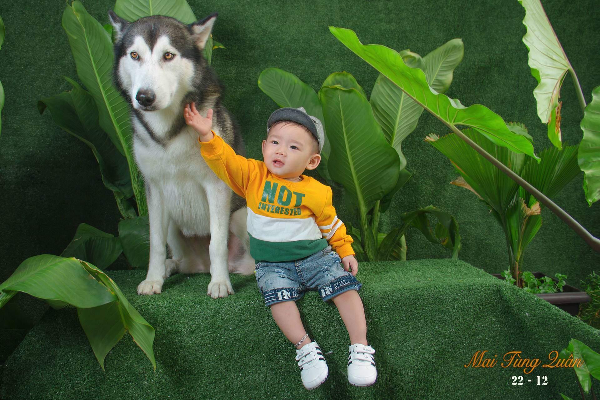 Bộ ảnh bé trai cùng chú Husky