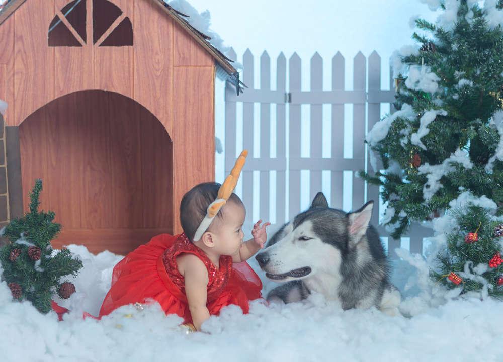 chụp hình Noel cùng thú cưng
