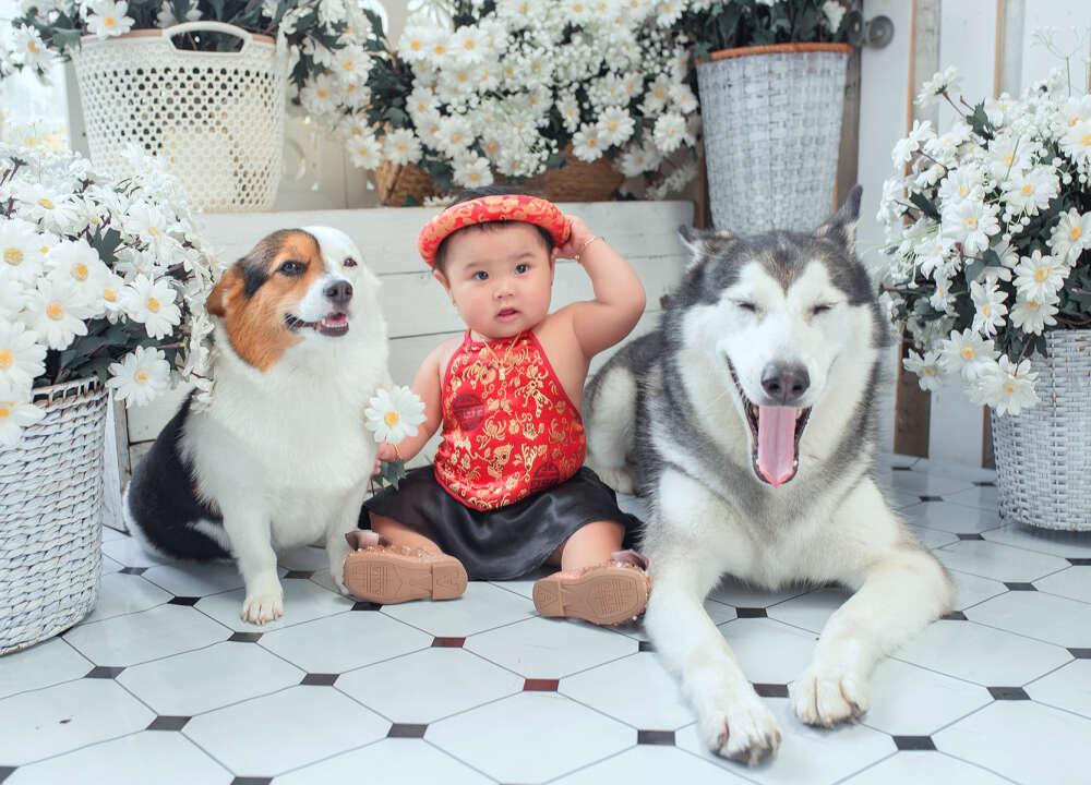 Chụp ảnh với thú cưng hcm